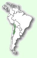 Андська кішка: мапа поширення