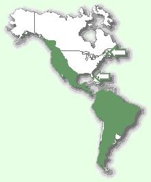 Пума - мапа поширення