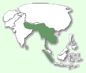 Мапа поширення кота-рибалки