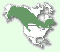 Мапа територій канадської рисі