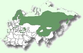 Мапа територій євразійської рисі
