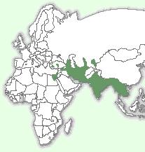 Очеретяний кіт: мапа поширення