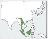 Мармурова кішка: мапа поширення