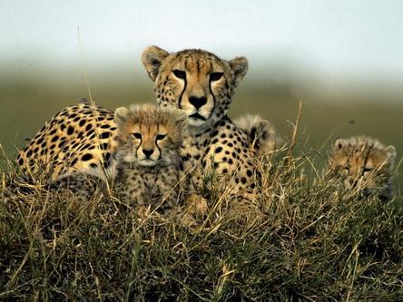 Мати із пухнастими малятами